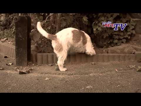 Jack Russell Terrier - Wesen, Verhalten und Haltung des Hundes