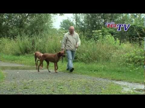 Rhodesian Ridgeback - Wesen, Verhalten und Haltung des Hundes