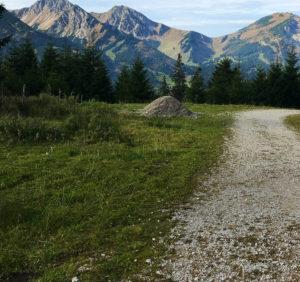 Berglandschaft mit Wiese und Kiesweg im Vordergrund