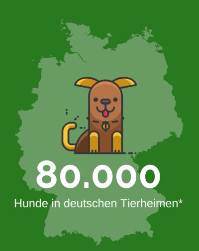 80.000 Hunde in deutschen Tierheimen
