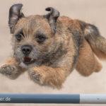 Agility-Training – Das solltest du über den Hundesport wissen