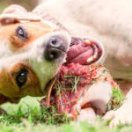 BARF – Biologisch artgerechte Rohfütterung für Hunde