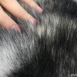Fellpflege – Tipps zur richtigen Pflege des Hundefells
