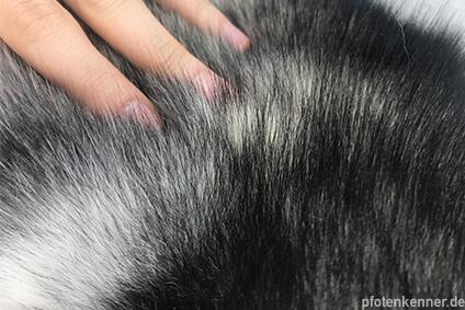 Hund wird durchs Fell gestreichelt