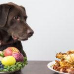 14 Lebensmittel die du deinem Hund nicht füttern solltest!
