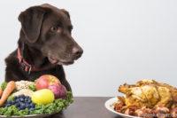 Hund sitzt an gedecktem Tisch mit Teller Gemüse und Hähnchen
