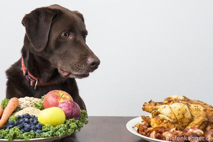 Hund sitzt an gedecktem Tisch mit Teller Gemüse/ Obst und Hähnchen