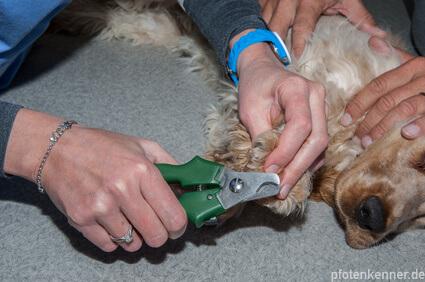 Hund bekommt die Krallen geschnitten