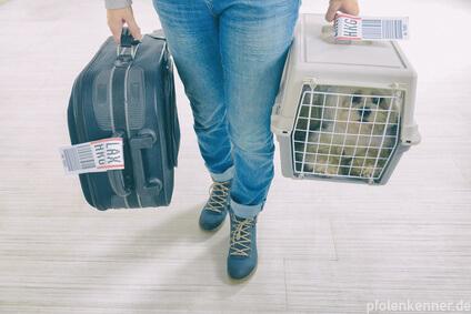 Hund in Transportbox, vorbereitet für die Reise