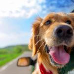 Urlaub mit dem Hund – Diese Punkte solltest du vorm Verreisen beachten