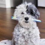 Zahnpflege beim Hund – Ursachen, Behandlung & Vorsorge von Zahnproblemen