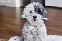 Zahnpflege beim Hund - Ursachen, Behandlung & Vorsorge von Zahnproblemen