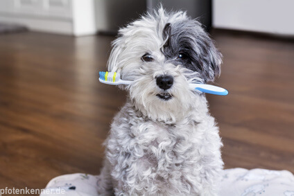 Hund mit Zahnbürste im Maul