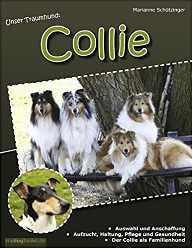 Collie Bild