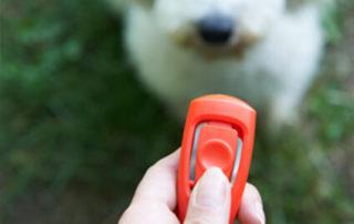 Clicker mit Hund im Hintergrund