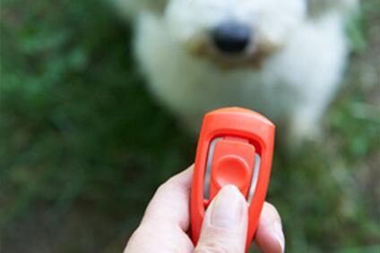 Clickertraining für Hunde – Tipps & Tricks