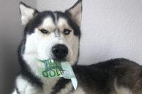 Hundesteuer: Husky mit 100 Euro-Schein im Maul