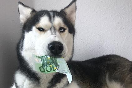 Hundesteuer – Das musst du als Hundebesitzer wissen!