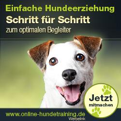 Shih Tzu - Wesen, Verhalten und Haltung des Hundes