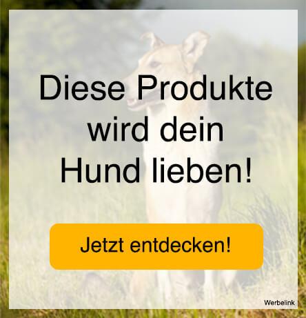 Holländischer Schäferhund - Wesen, Verhalten und Haltung