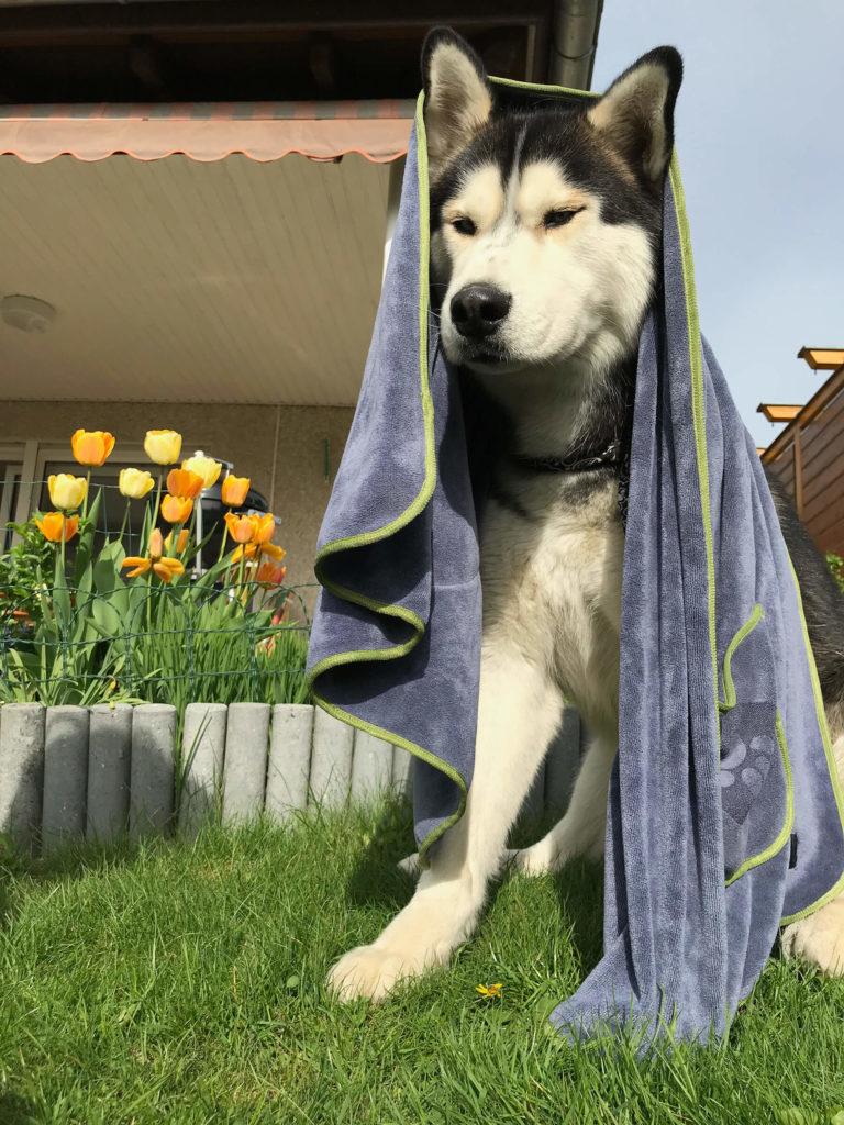 Hundehandtücher – Funktionen, Vorteile & Empfehlung
